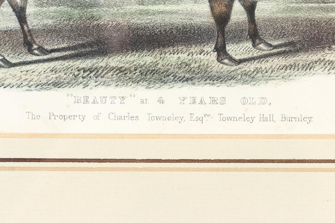Two English Steel Engravings of Cattle - 10