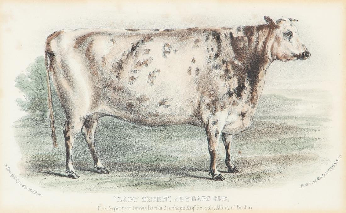 Two English Steel Engravings of Cattle