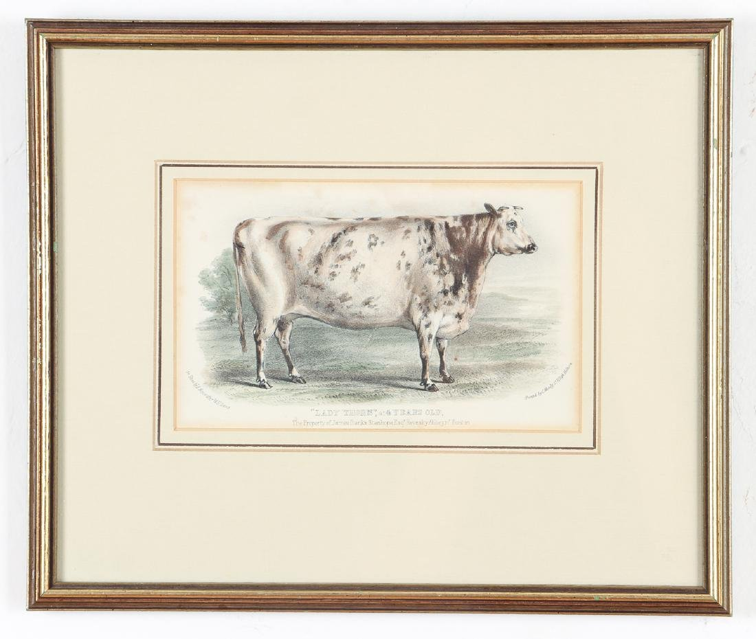 Two English Steel Engravings of Cattle - 2