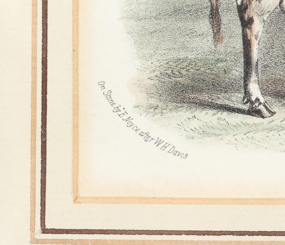 Two English Steel Engravings of Cattle - 5