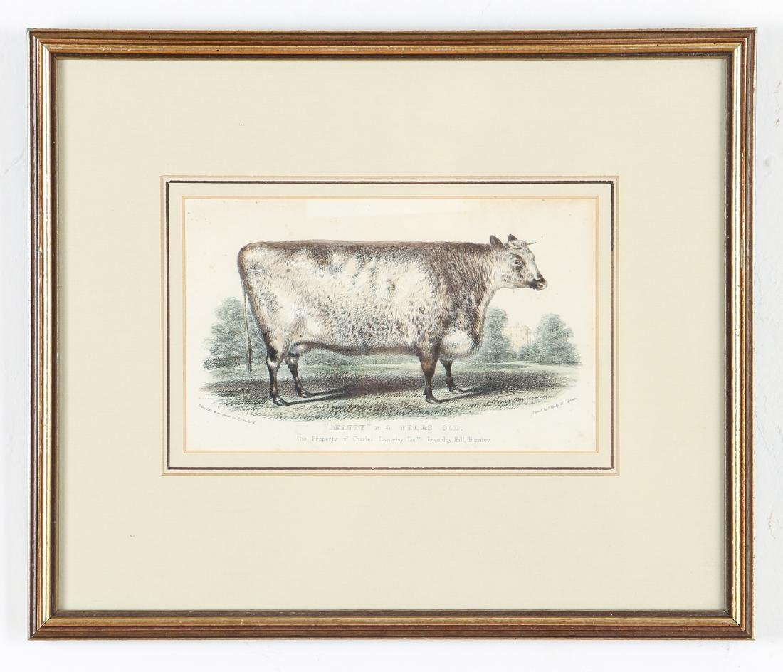 Two English Steel Engravings of Cattle - 7