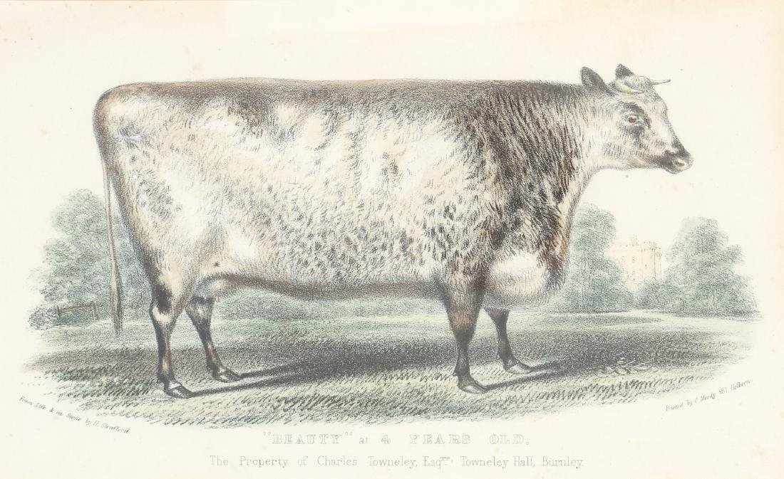 Two English Steel Engravings of Cattle - 8
