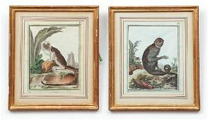 Two Antique Monkey Themed Prints