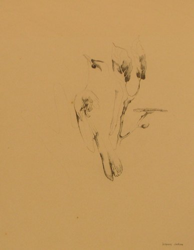 516: Suzanne Jackson drawing surreal bird