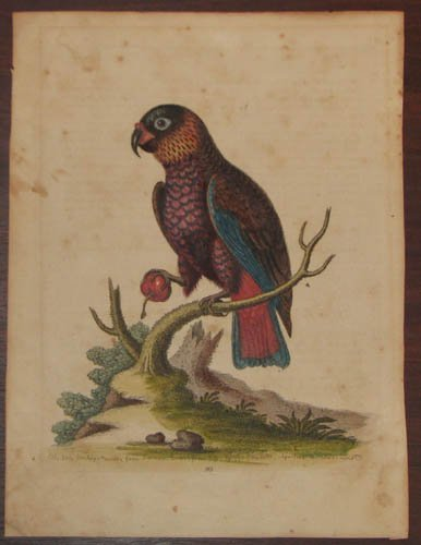 15: 3 hand colored bird engravings incl. Martinet