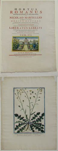 17: 1 plate and Cover of Hortus Romanus, 1772-93