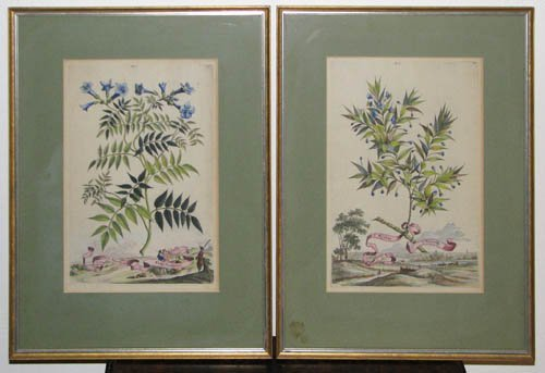 20: Pair of Hand colored Botanical engravings