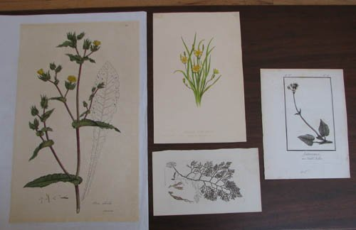 21: 4 Botanical Engravings Sansom, Sowerby, and others