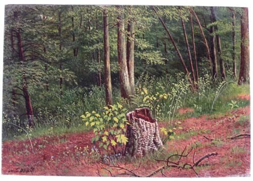 150: W.C. Wall oil ptg. Old  Stump in  Forest Glade