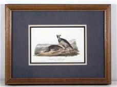 43 2 prints Currier Ives Indian Falls Audubon Calif
