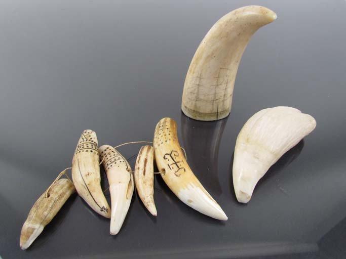 Assorted Lot of Scrimshaw tusks/teeth