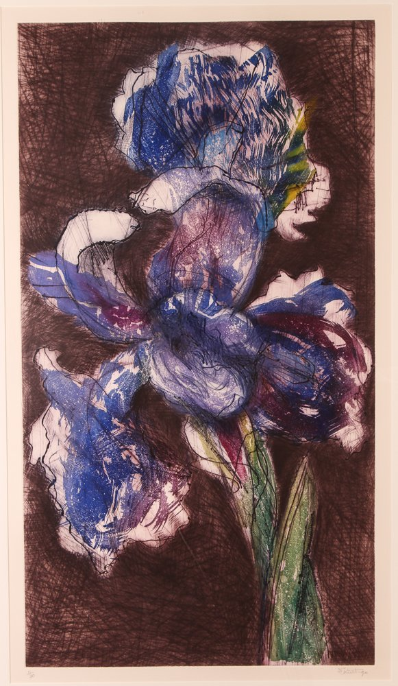 "William Kentridge ""Dutch Iris II"" color etching and"