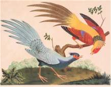 Two Hand Colored Exotic Bird Engravings Carlo