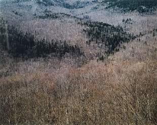 """Eliot Porter (Am. 1901-1990), """"Hillside of Bare Trees,"""