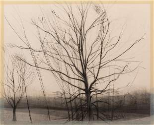 Sylvia Plimack Mangold, Pin Oak 1986, Etching, aquatint