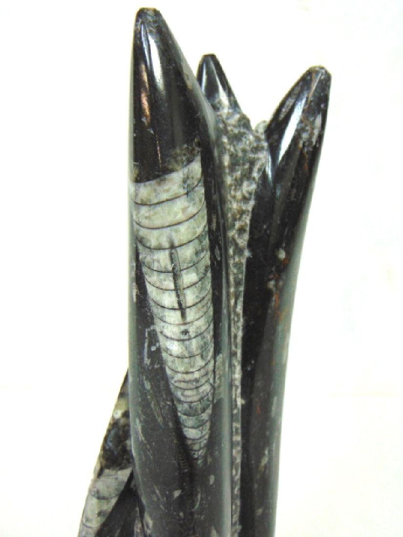 EXTINCT ORTHOCERAS MOLLUSK FOSSIL - 5