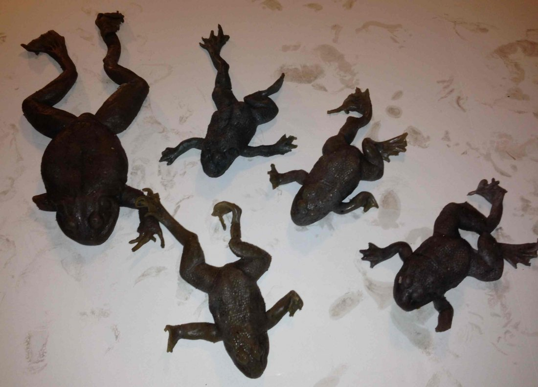 5 Rubber Frogs from the Hit Film Magnolia
