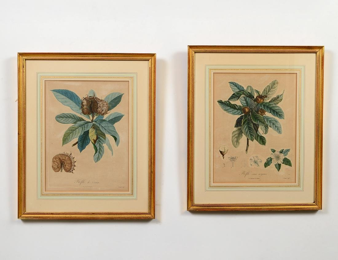 TWO FRENCH HAND-COLORED BOTANICAL ENGRAVINGS