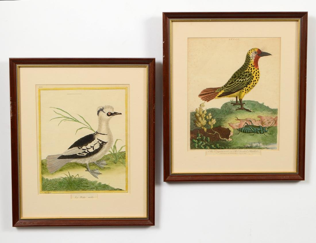 TWO HAND-COLORED ENGRAVED BIRD PLATES