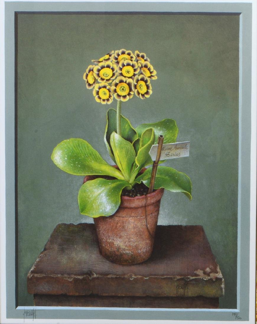 NINE OFFSET LITHOGRAPHS OF POTTED FLOWERS - 14