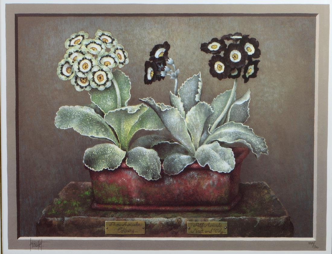 NINE OFFSET LITHOGRAPHS OF POTTED FLOWERS - 16
