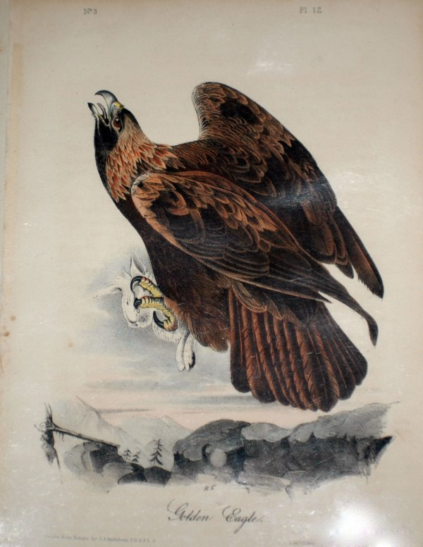 410: JOHN JAMES AUDUBON (American. 1785-1851)