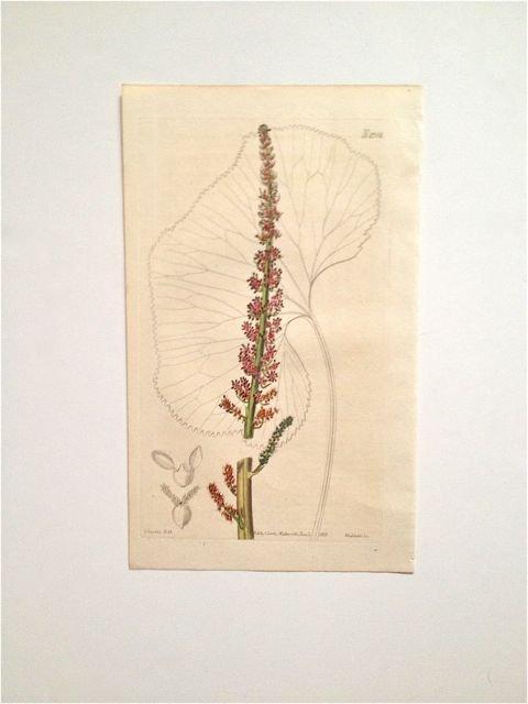 George Curtis, c. 1795-1827.