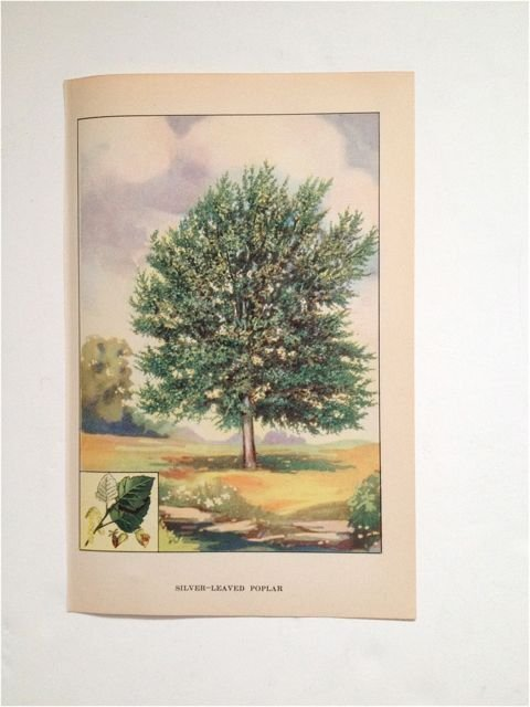 "The Nature Library's ""Trees"", by Julia Ellen Rogers c."