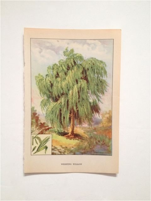 """The Nature Library's """"Trees"""", by Julia Ellen Rogers c."""