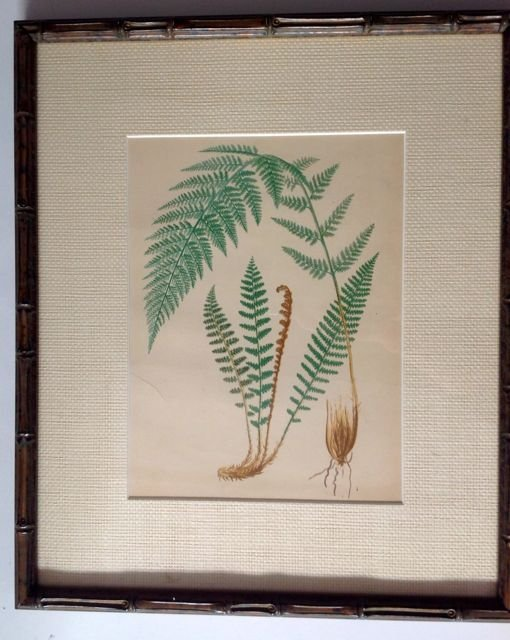 Very Rare Fern Antique Print c. 1800