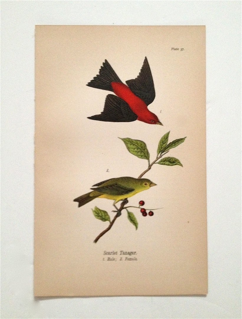 Birds of Pennsylvania, c. 1875