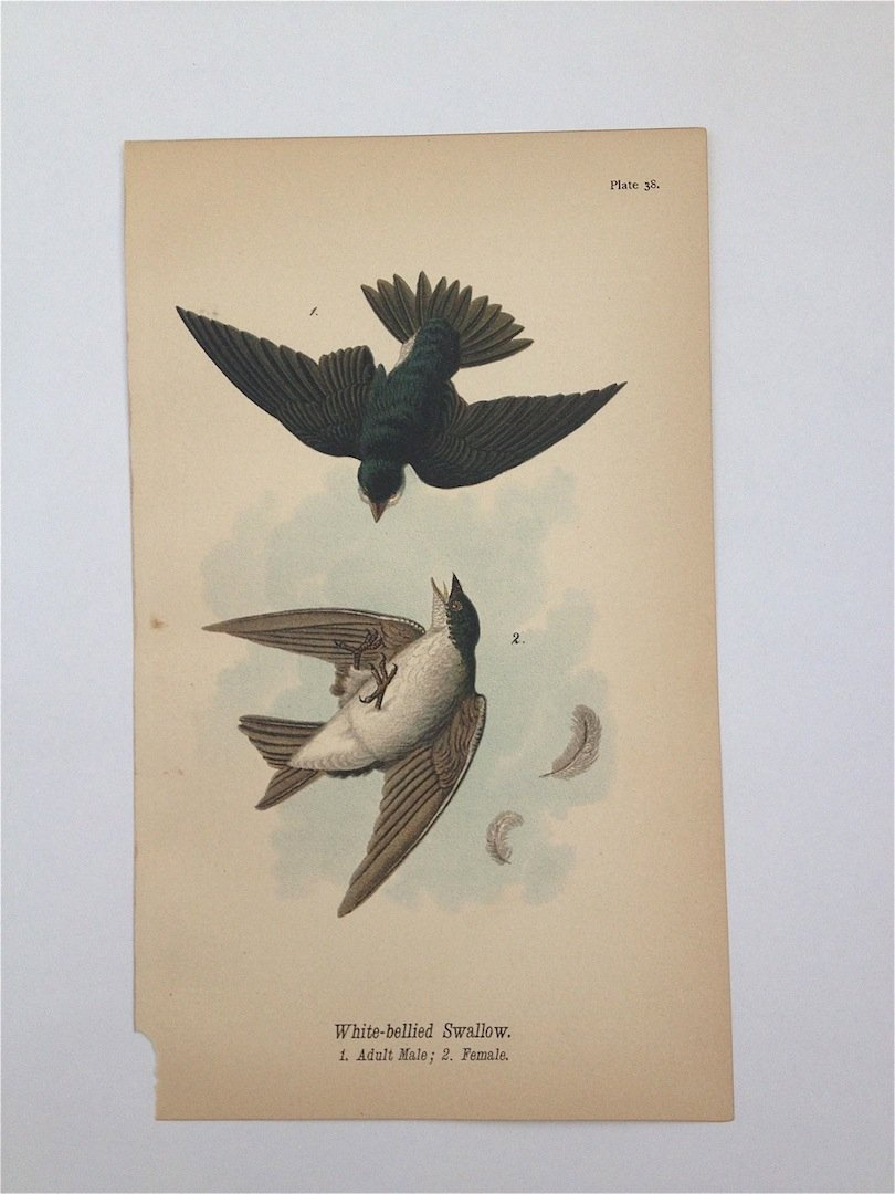 Birds of Pennsylvania, c. 1885.