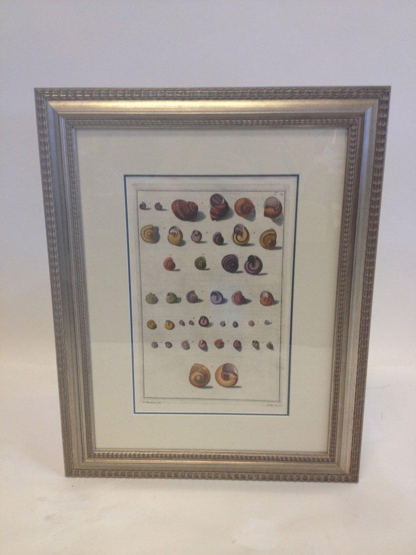 Shells, 1776.