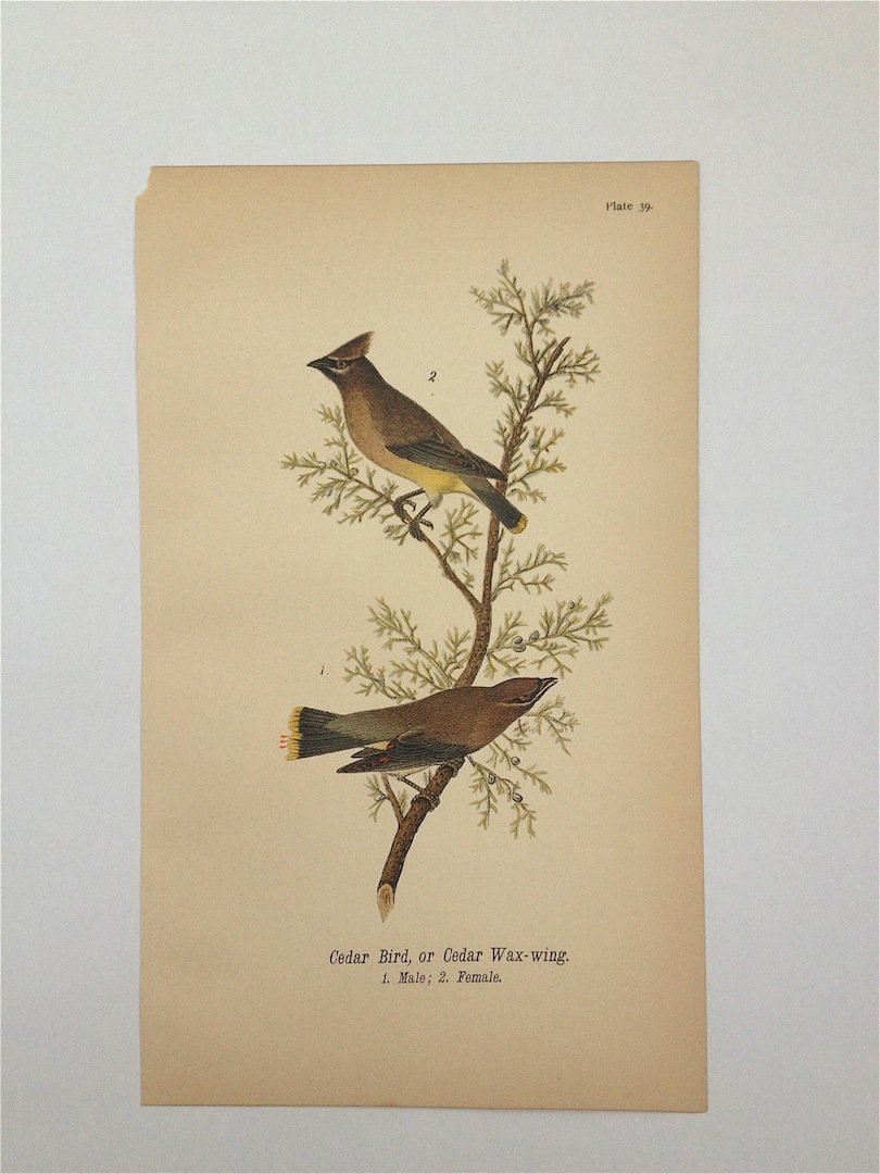 Birds of Pennsylvania, c. 1885.