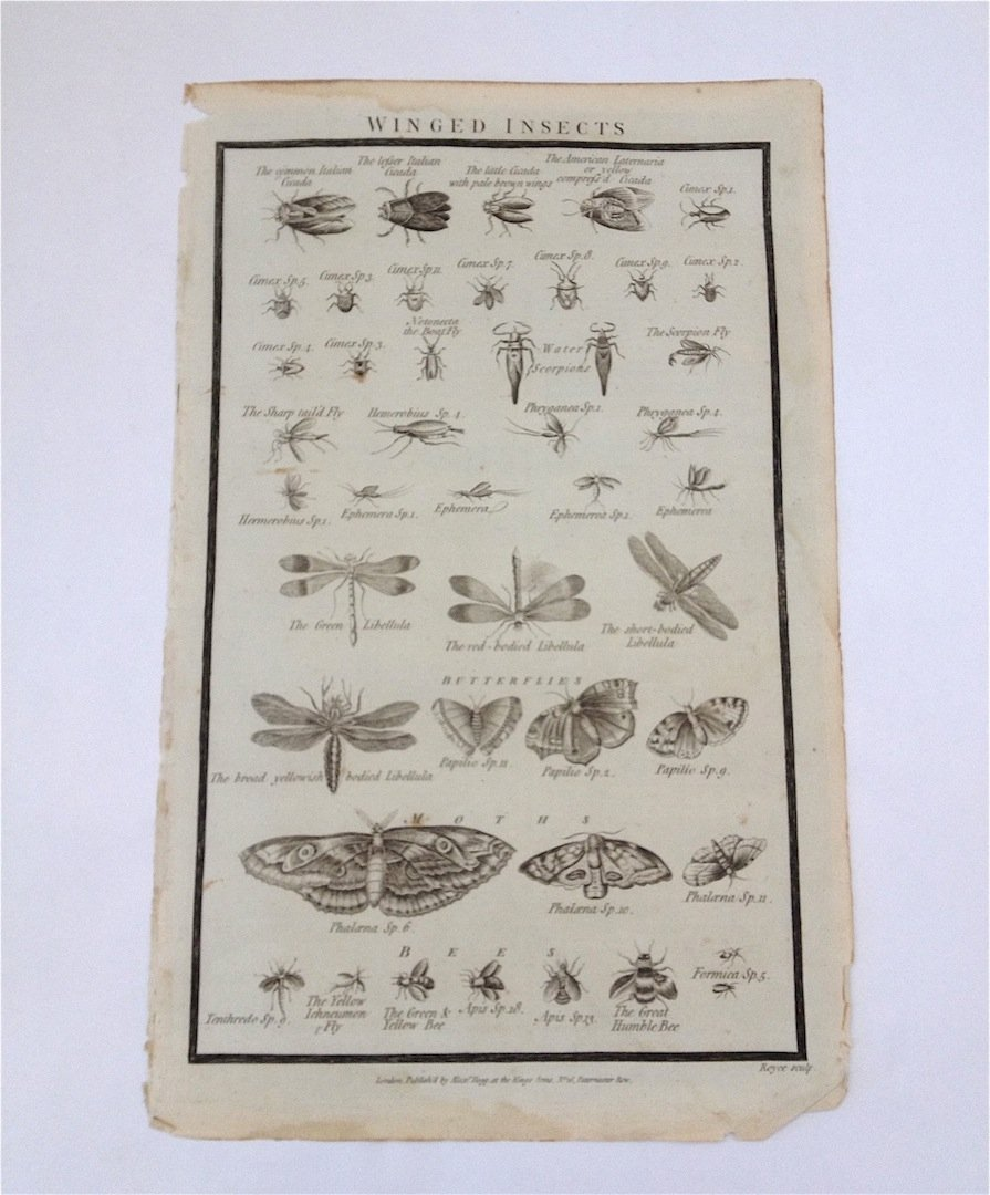 Insects. c. 1720's