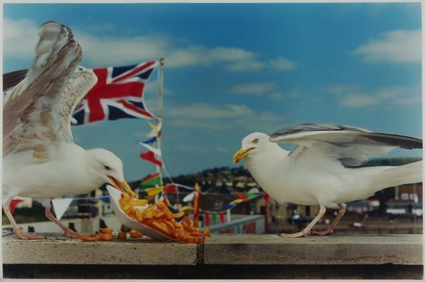 15: Martin Parr (British, b. 1952) Two works of art: We