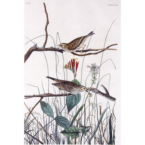 "5: John James Audubon ""Savannah Finch,"" hand-colored en"