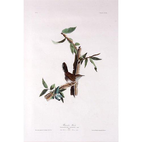 """7: John James Audubon """"Bewick's Wren,"""" hand-colored eng"""