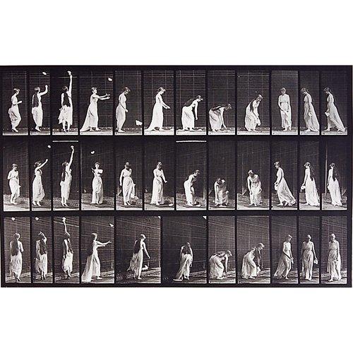 11: Eadweard Muybridge Animal Locomotion plate nos. 771