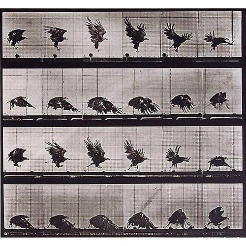 13: Eadweard Muybridge Animal Locomotion plate nos. 770