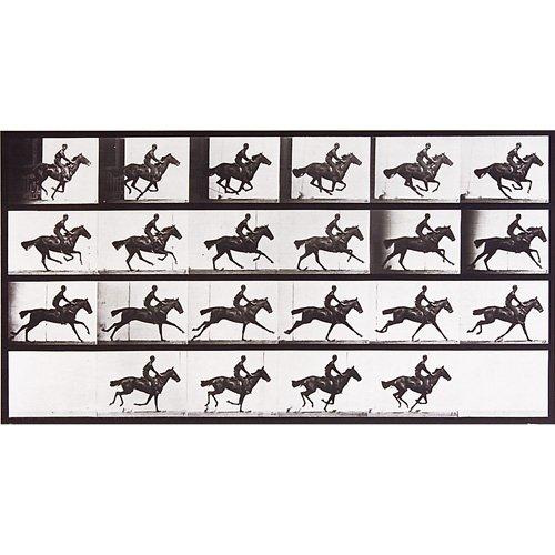 15: Eadweard Muybridge Animal Locomotion plate nos. 759