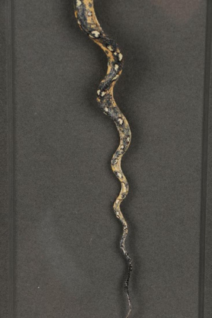 Christopher Marley, Green Tree Python Specimen - 5