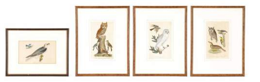 Collection of 4 Prints from American Ornithology