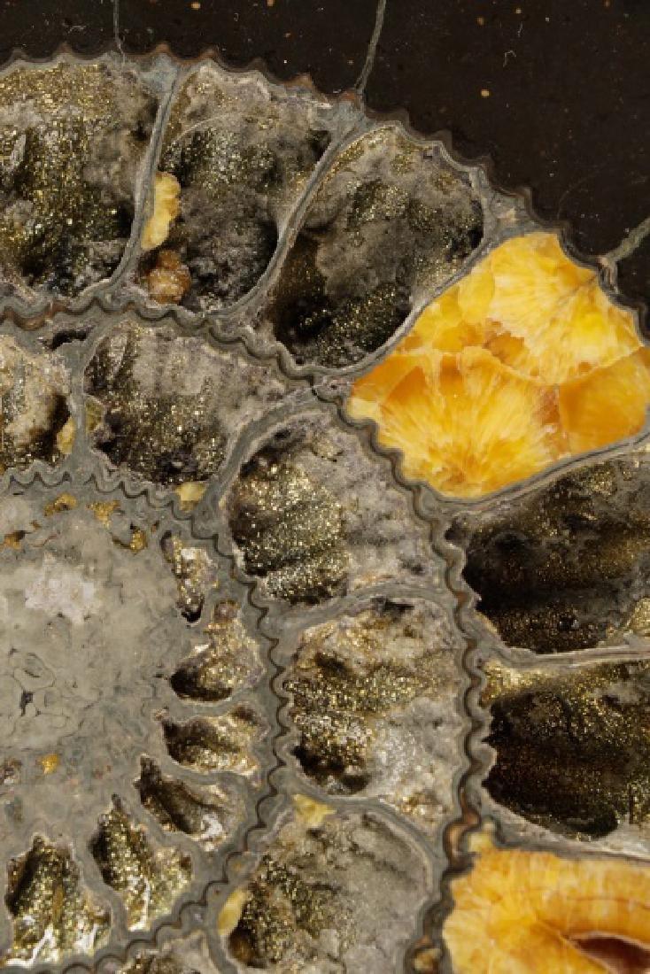 Pair Speetoniceras Ammonites with Drusy Pyrite - 4