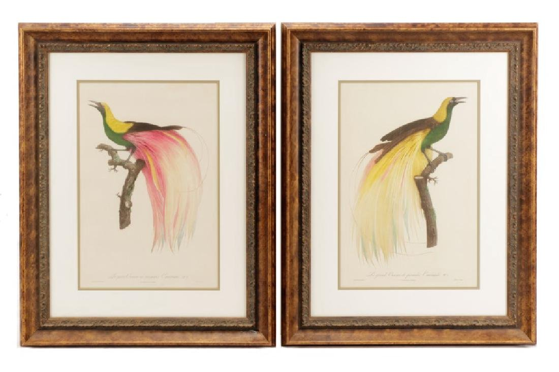 Pair of After Barraband Bird of Paradise Works