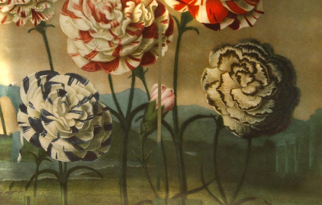 Set, 4 Plates from Thorton's The Temple of Flora - 5
