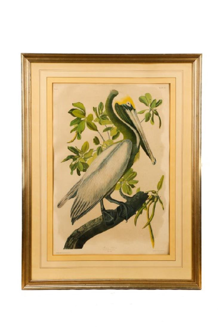 "Audubon, ""Brown Pelican"", Bien Edition"
