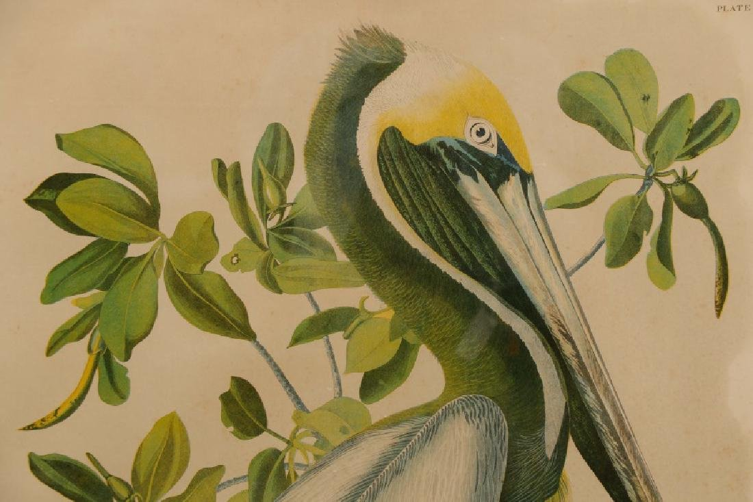 "Audubon, ""Brown Pelican"", Bien Edition - 2"