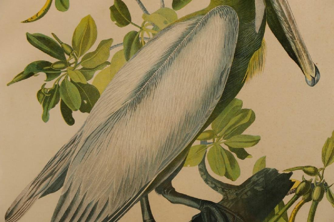 "Audubon, ""Brown Pelican"", Bien Edition - 3"
