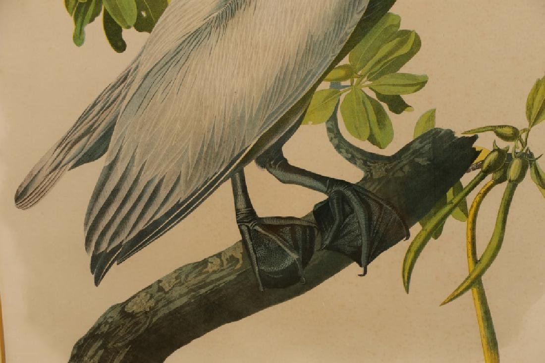"Audubon, ""Brown Pelican"", Bien Edition - 7"